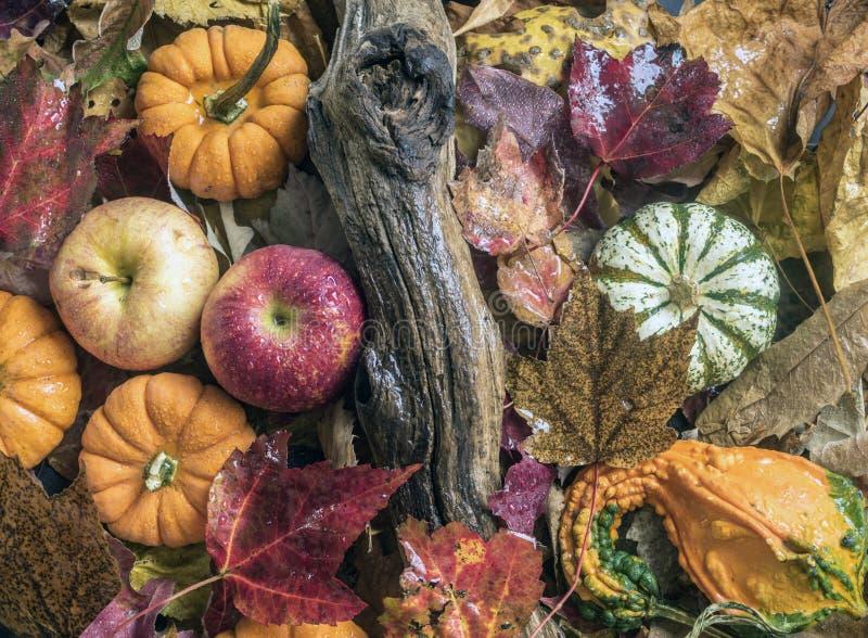 Di autunno vita ancora immagine stock
