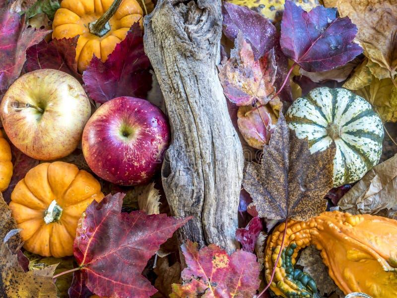 Di autunno vita ancora fotografia stock libera da diritti