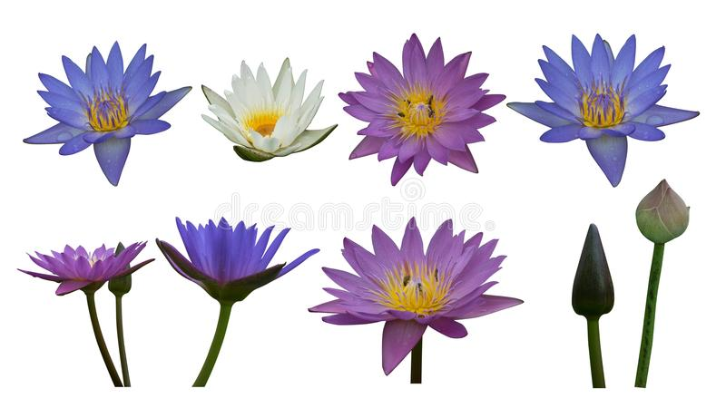 Di cut colorful lotus on white background royalty free stock photos
