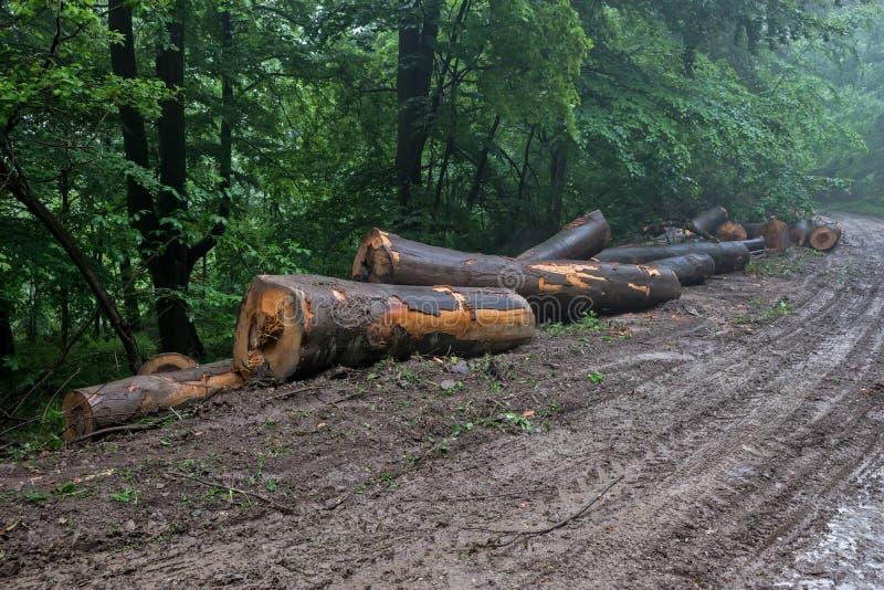 di legno collega la strada della montagna immagine stock libera da diritti