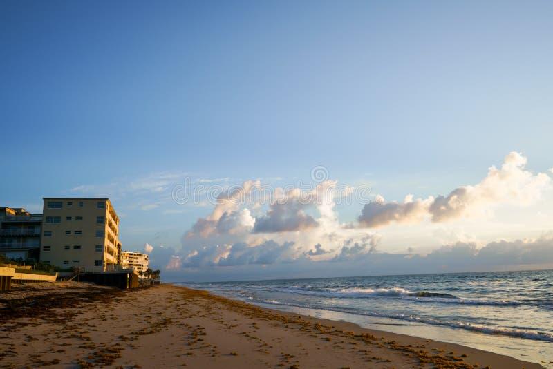 Di mattina le onde del mare vengono caricato con il sargassum fotografia stock