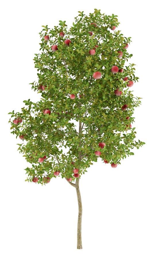 Di melo con le mele rosse isolate su bianco royalty illustrazione gratis