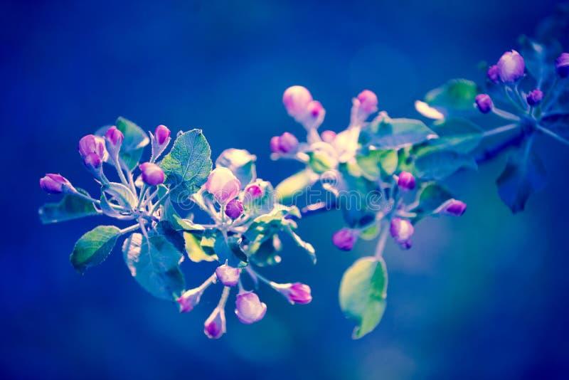 Di melo d'annata rosa del fiore fotografia stock