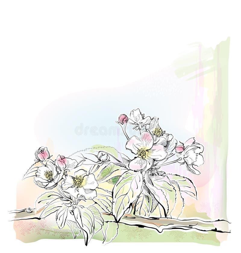 Di melo in fioritura illustrazione vettoriale