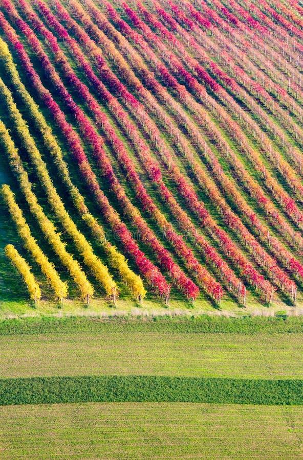 Di Modena de Castelvetro, vinhedos no outono foto de stock royalty free