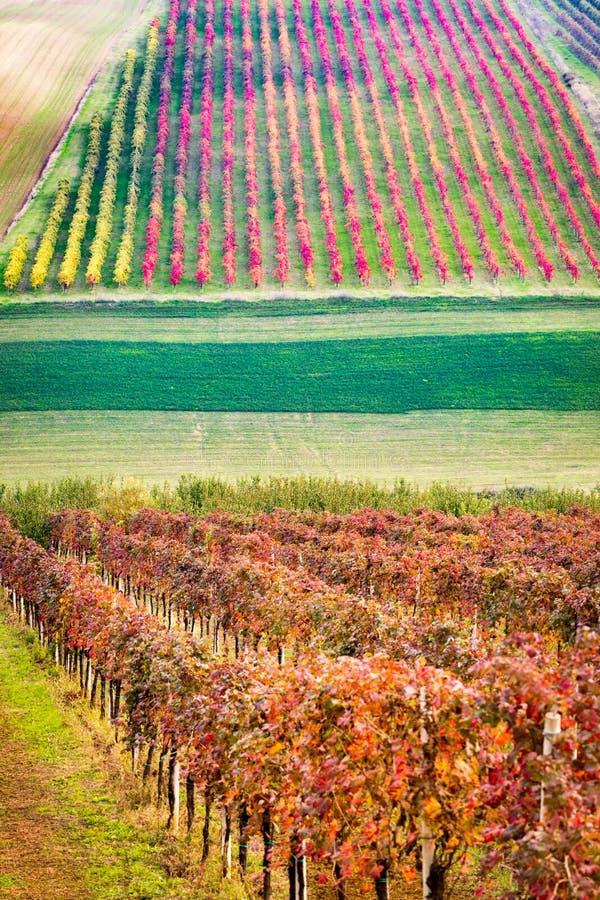 Di Modena de Castelvetro, vinhedos no outono imagens de stock royalty free