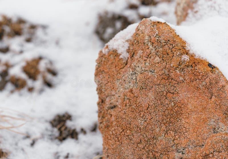 di muro a secco coperto di lichene alla luce di inverno fotografia stock libera da diritti