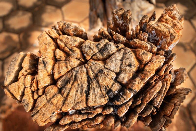 Di natura fatto arte di legno dovuto esposizione lunga in tempo differente fotografie stock libere da diritti
