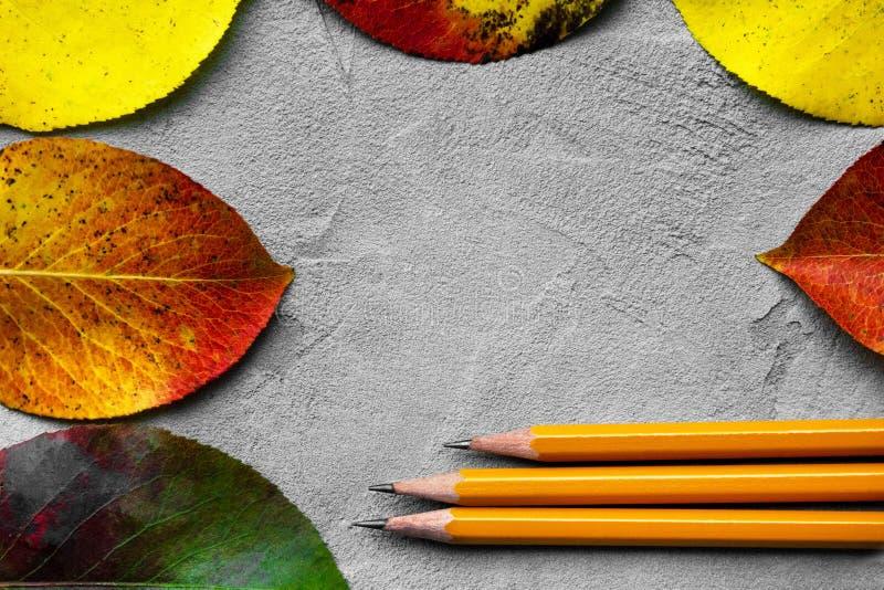 Di nuovo al concetto del banco L'immagine di vista superiore delle matite accanto all'autunno rimane il fondo grigio di struttura fotografia stock libera da diritti