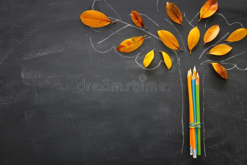 Di nuovo al concetto del banco L'immagine di vista superiore delle matite accanto allo schizzo dell'albero con l'autunno asciutto immagini stock