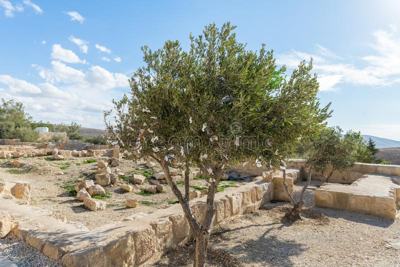 Di olivo con i pezzi di tessuto che appendono su con i desideri nel cortile della chiesa commemorativa di Mosè sul supporto Nebo  immagine stock