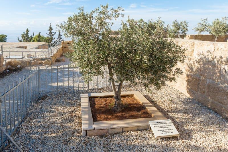 Di olivo piantato da papa John Paul 2 nel cortile della chiesa commemorativa di Mosè sul supporto Nebo vicino alla città di Madab fotografia stock libera da diritti