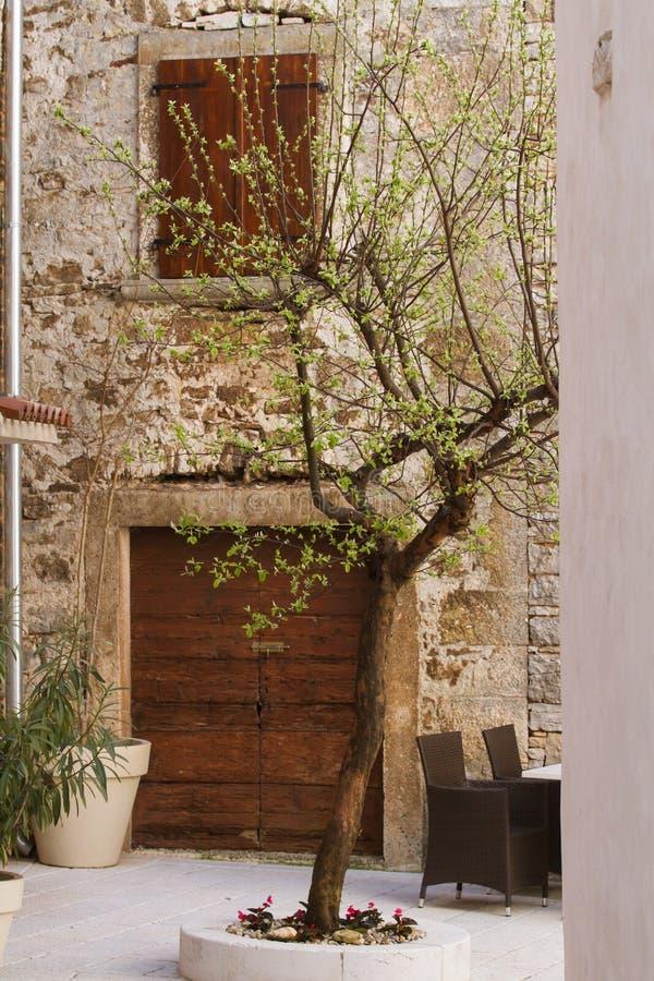 Di olivo in un cortile croato fotografie stock libere da diritti