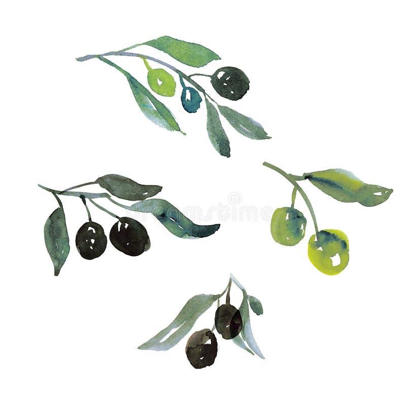 Di olivo verde poco ramo con le bacche illustrazione vettoriale
