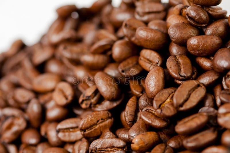 Di recente macinato i fagioli del caff? arrostiti con i frutti della pianta del caff?, su fondo bianco fotografia stock libera da diritti