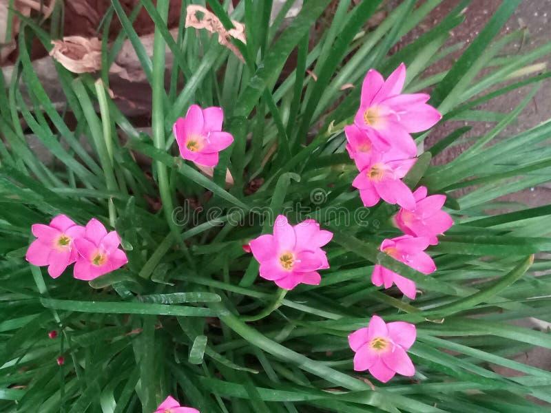 Di rosa giardino floreale lilly immagine stock