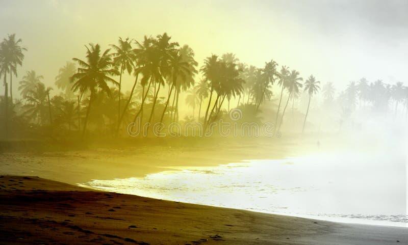 Di spiaggia foderata di palma atlantica selvaggia alla costa del Ghana fotografia stock