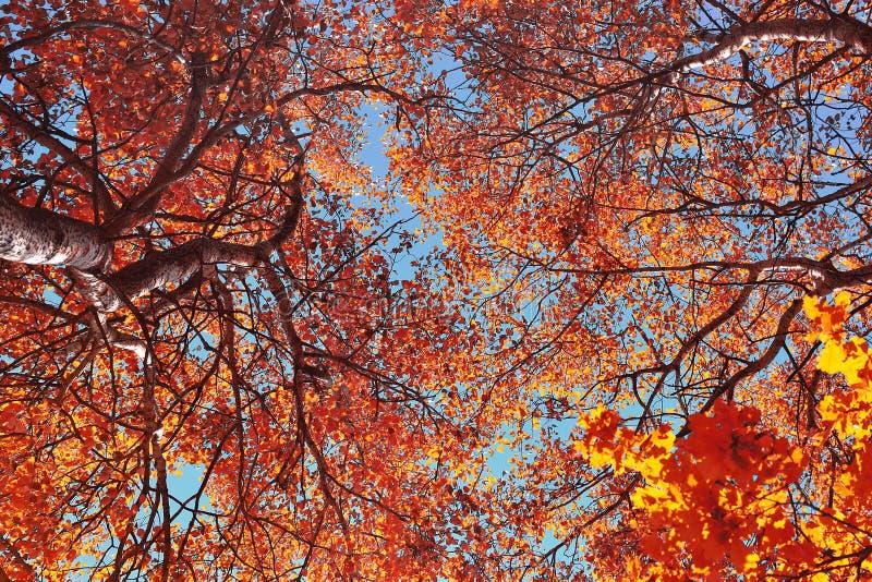 Dia agradável do outono fotos de stock royalty free