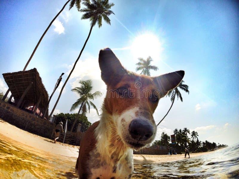 Dia amigável da praia do cão foto de stock