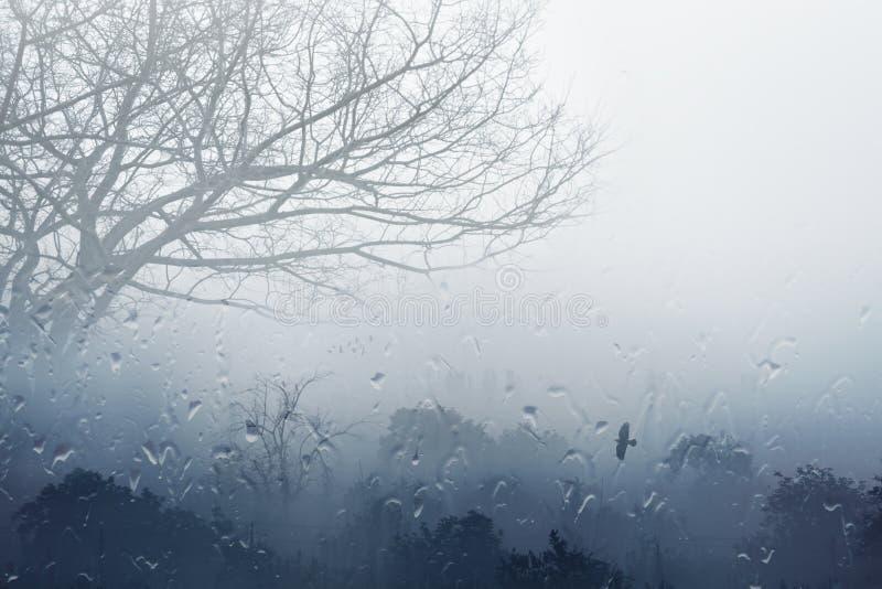 Dia chuvoso nevoento da queda imagens de stock