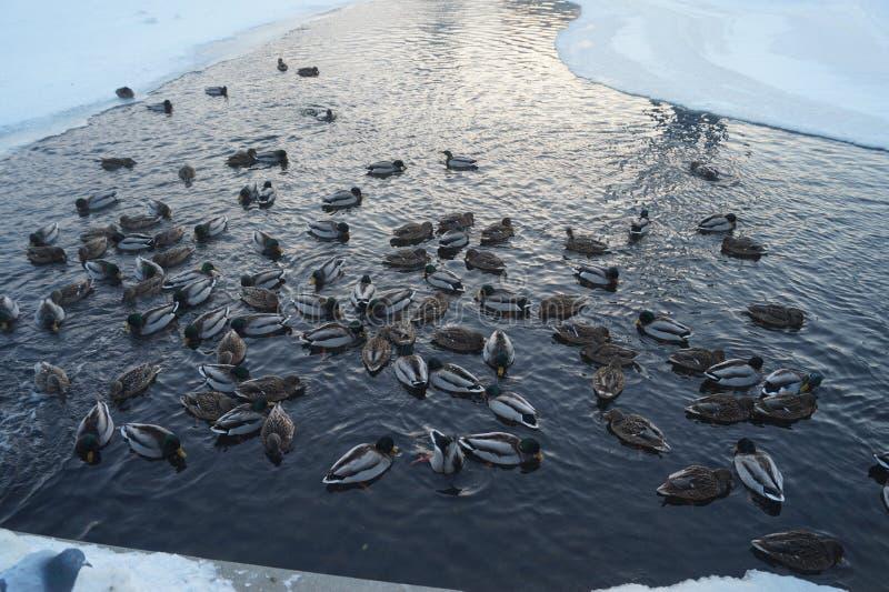 Dia claro do inverno em algum lugar profundamente em Rússia imagens de stock royalty free