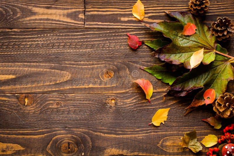 Download Dia Da Ação De Graças, Fundo Das Folhas De Outono Foto de Stock - Imagem de alimento, outono: 80102838