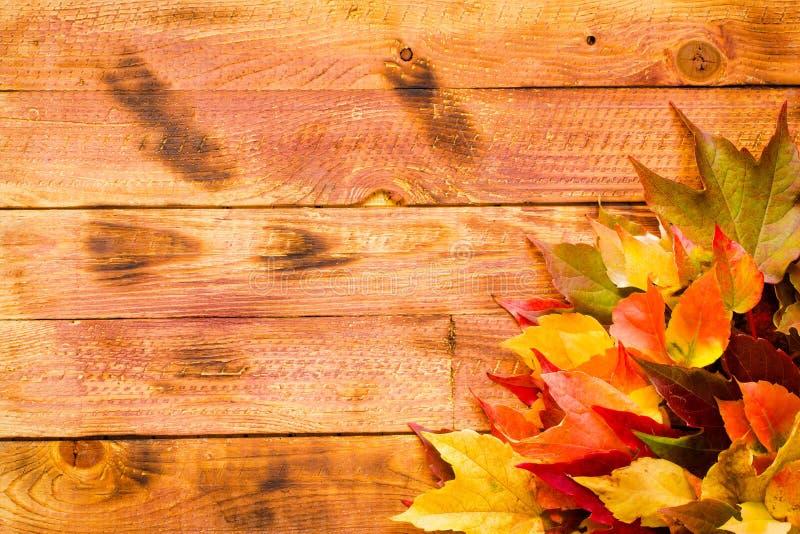 Download Dia Da Ação De Graças, Fundo Das Folhas De Outono Imagem de Stock - Imagem de foliage, alimento: 80103147