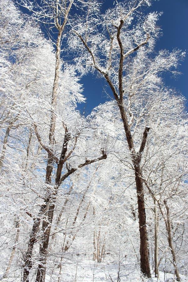Dia da neve imagens de stock royalty free