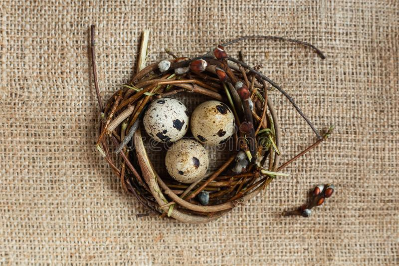 Dia da Páscoa Um ninho pequeno com ovos de codorniz em um fundo do pano de saco, textura da serapilheira foto de stock royalty free