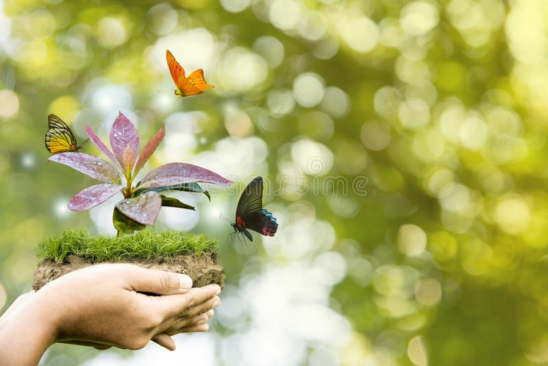 Dia da proteção da terra nas mãos das árvores que crescem o fundo verde das plântulas e das borboletas, bokeh, móbil, árvore na p fotos de stock royalty free