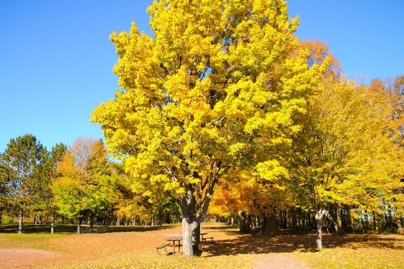 Dia da queda de setembro no parque imagens de stock royalty free