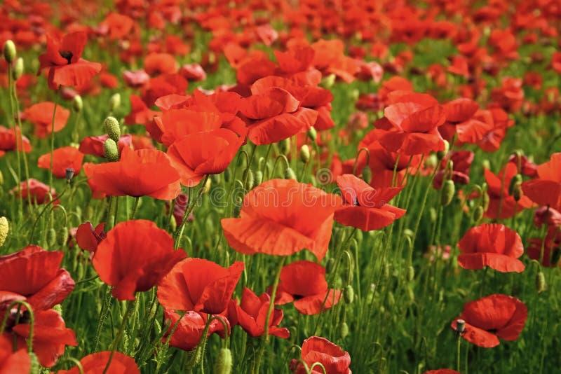 Dia da relembrança, Anzac Day, serenidade imagem de stock