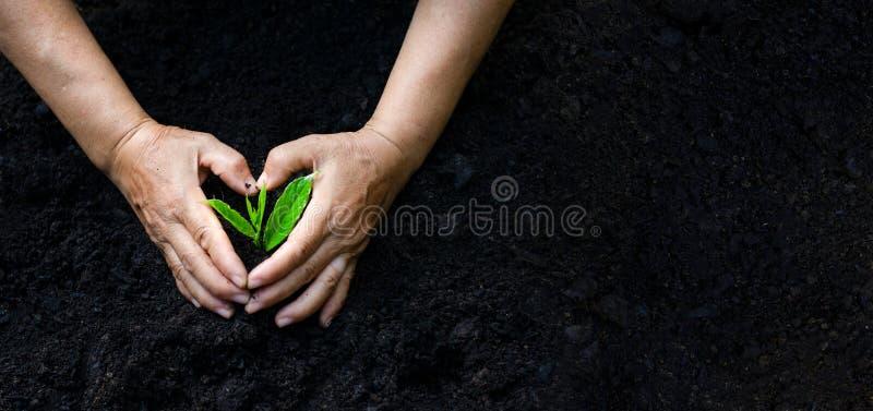 Dia da Terra do ambiente nas mãos das árvores que crescem plântulas Bokeh esverdeia a mão fêmea do fundo que guarda a árvore no g fotos de stock royalty free