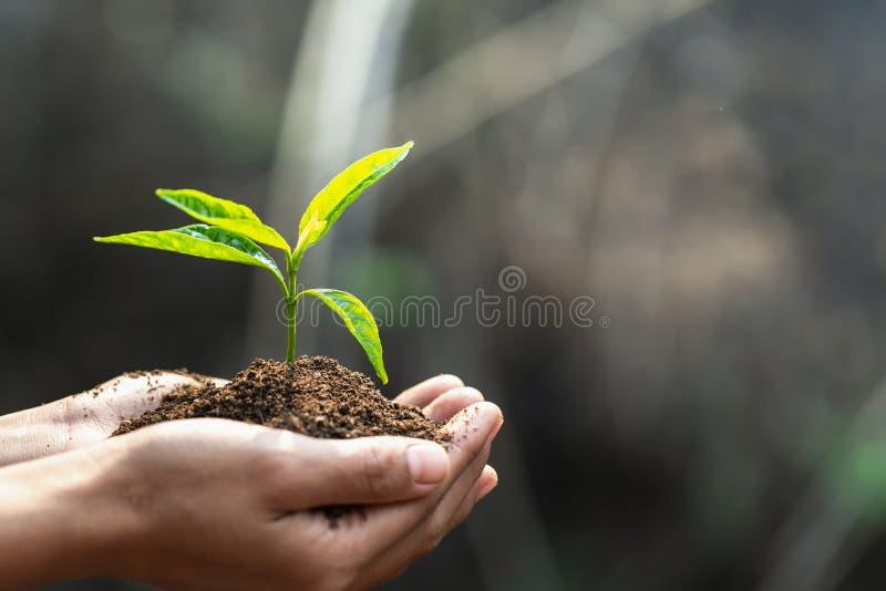 Dia da Terra do ambiente nas m?os das ?rvores que crescem pl?ntulas ?rvore f?mea da terra arrendada da m?o do fundo do verde de B foto de stock royalty free