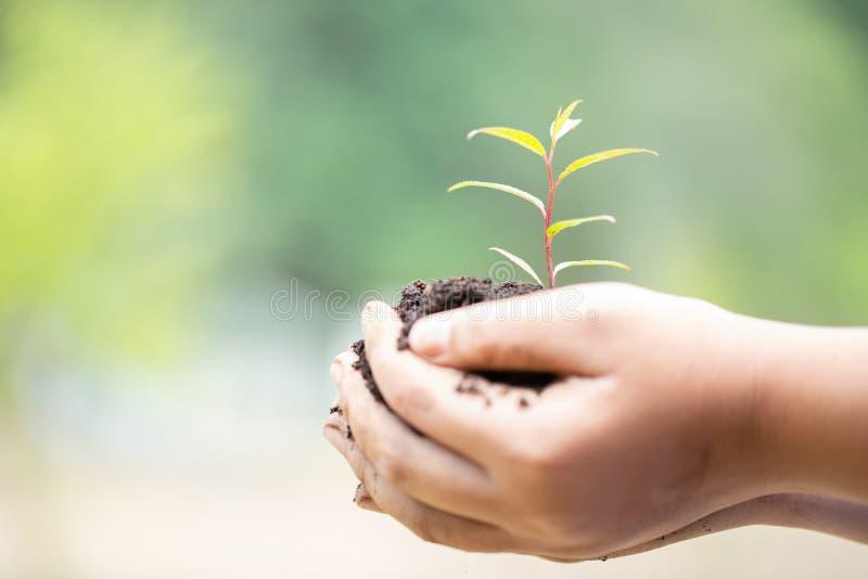 Dia da Terra nas m?os das ?rvores que crescem pl?ntulas ?rvore f?mea da terra arrendada da m?o na grama do campo da natureza Fund imagens de stock