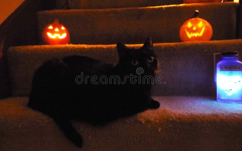 Dia das Bruxas Cat Trick ou deleite imagens de stock royalty free