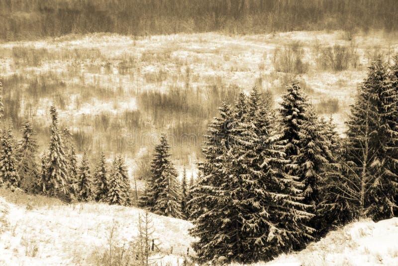 Dia de inverno fotos de stock royalty free