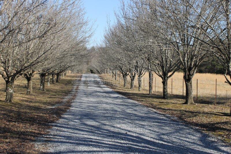 Dia de inverno bonito com árvores foto de stock