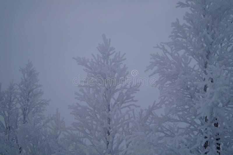 Dia de inverno em Leppäjärvi fotografia de stock