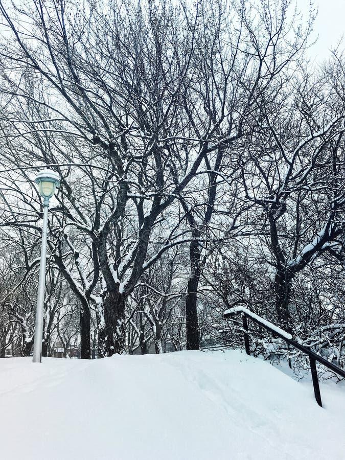 Dia de inverno em um parque nevado imagens de stock