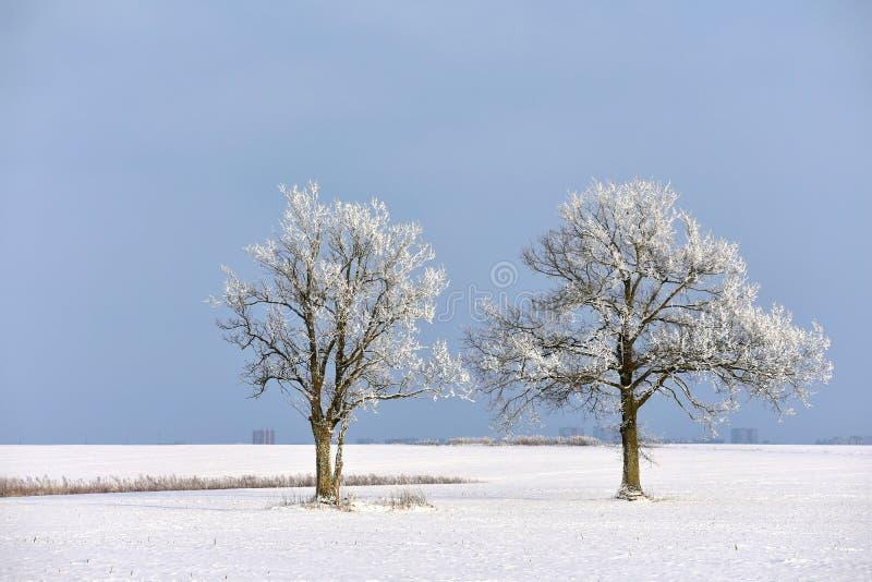 Dia de inverno ensolarado em Lituânia fotografia de stock