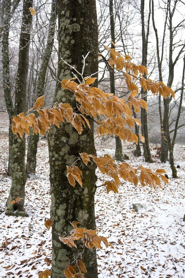 Dia de inverno na floresta do outono imagens de stock