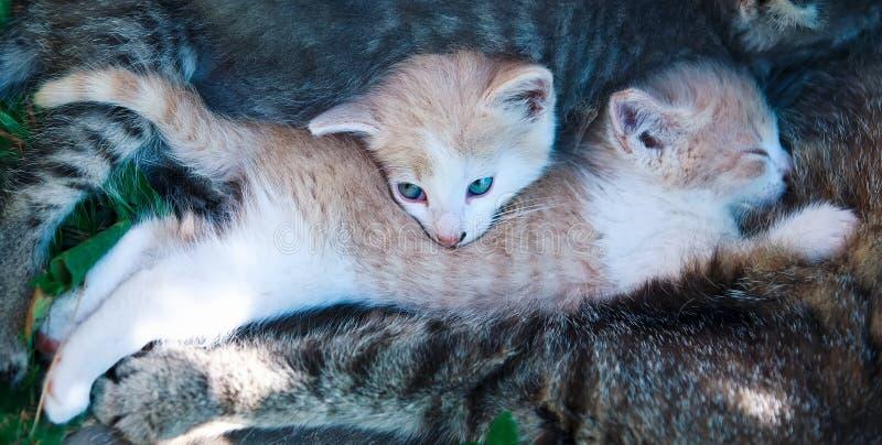 Dia de verão bonito da fraternidade da sesta do gato relaxe fotos de stock