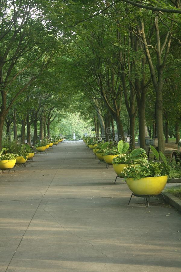 Dia de verão bonito no Parc Lafontaine de Montreal foto de stock royalty free