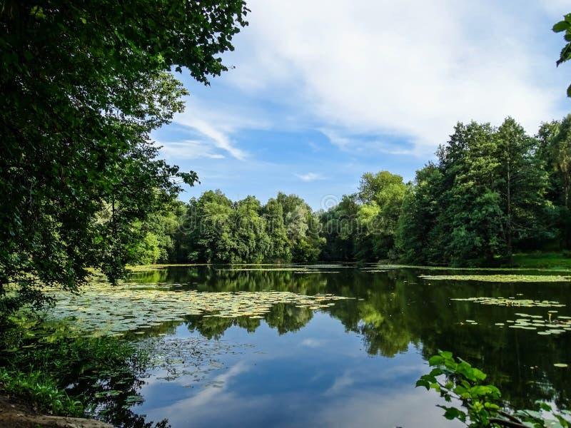 Dia de verão com uma lagoa em um parque imagens de stock royalty free