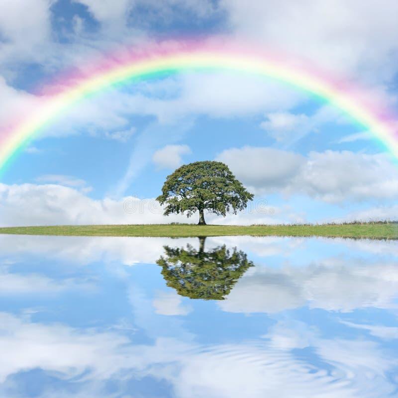 Dia do arco-íris fotografia de stock