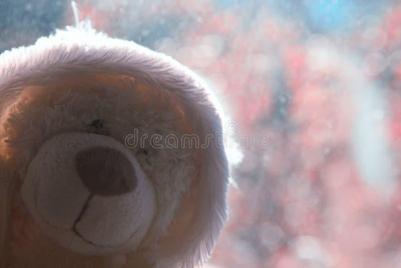 Dia do bokeh das janelas do urso de lãs imagem de stock royalty free