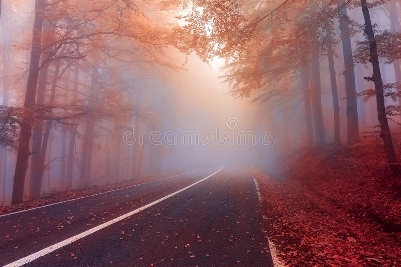 Dia do outono na névoa forestMysterious nevoenta no outono dianteiro imagem de stock royalty free