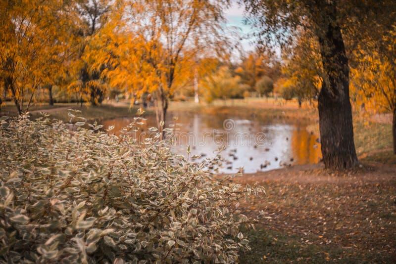 Dia do outono, parque de cidades, árvores do lago imagem de stock