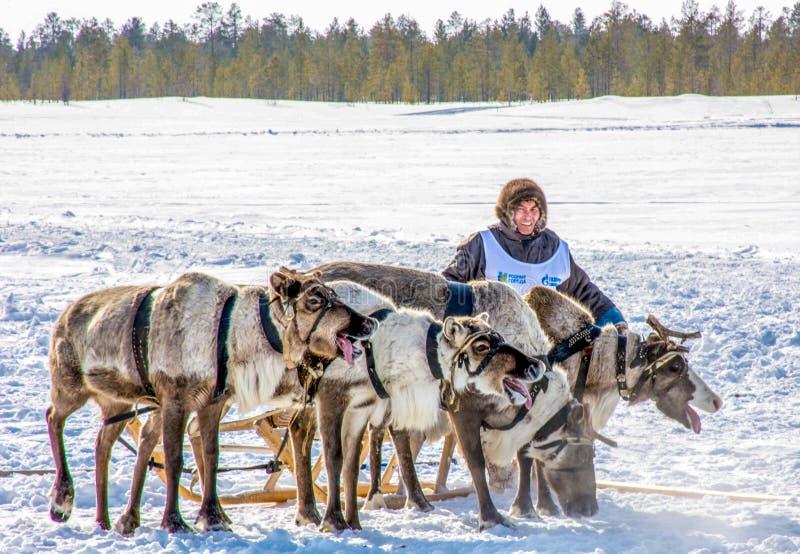 Dia do pastor da rena na península de Yamal fotografia de stock